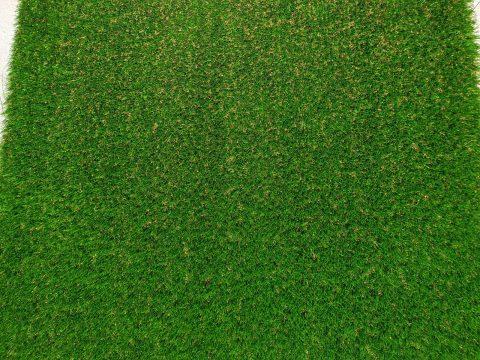Evergreen 35 - Sun